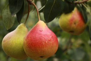 pear superfood boost your immunity
