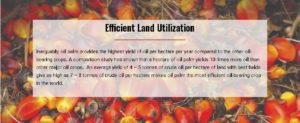 Land utilization palm oil