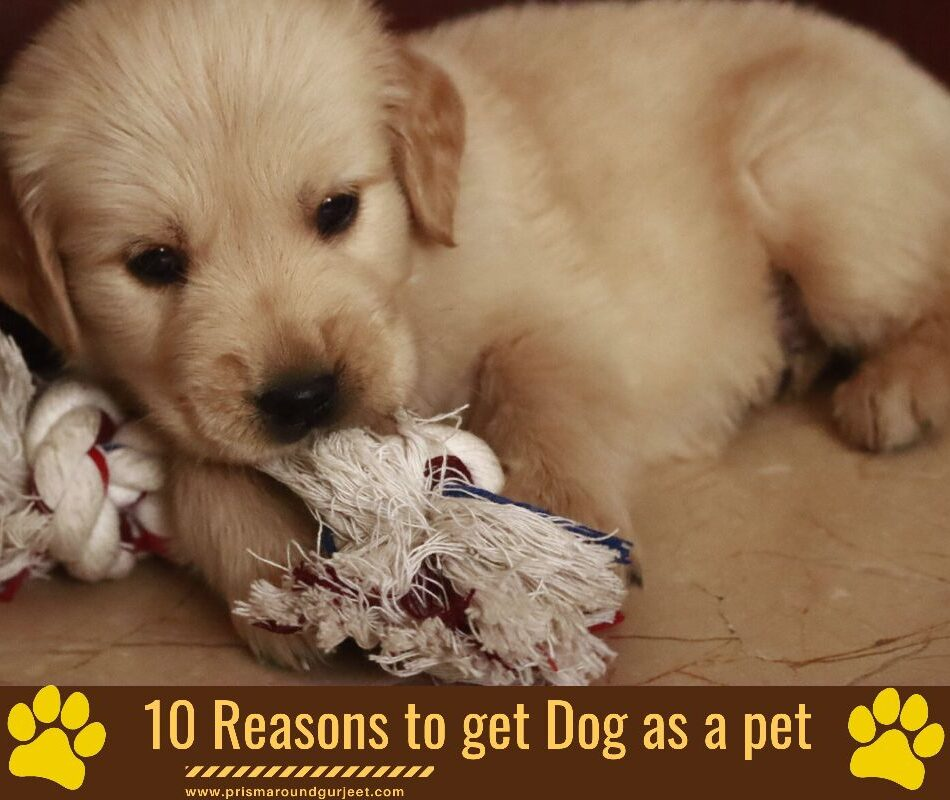 10 Reasons Why Should You Get A Dog